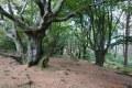 Knorrige Bäume am Gipfel der lippischen Velmerstot